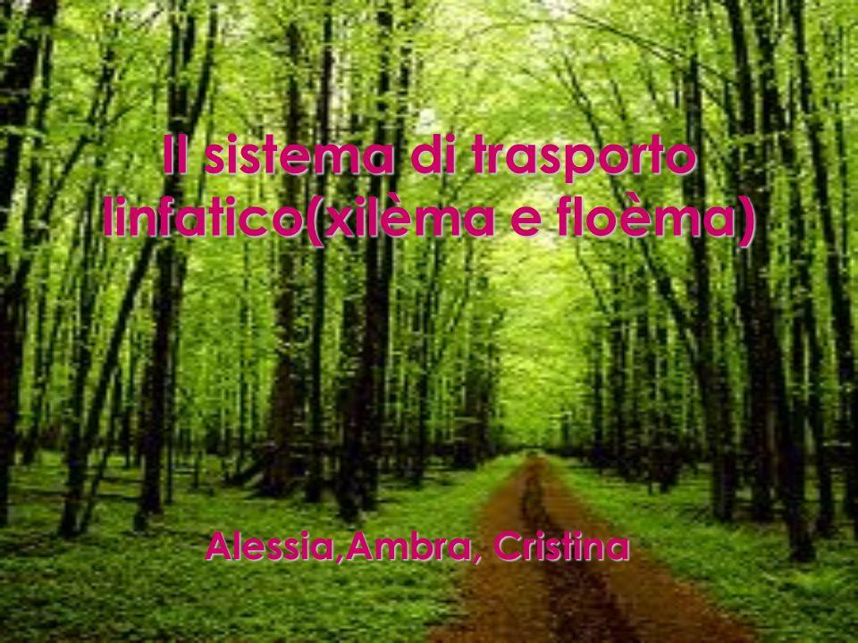 Introduzione La nostra presentazione tratta di due argomenti: lo xilèma e floèma.