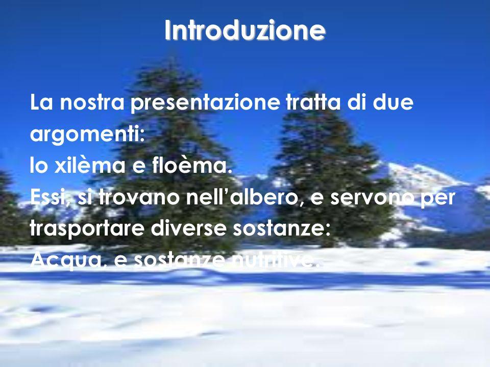 Introduzione La nostra presentazione tratta di due argomenti: lo xilèma e floèma. Essi, si trovano nellalbero, e servono per trasportare diverse sosta