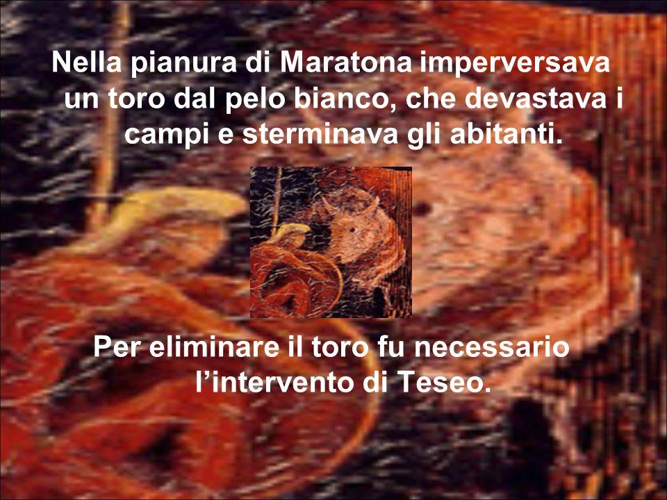 Nella pianura di Maratona imperversava un toro dal pelo bianco, che devastava i campi e sterminava gli abitanti. Per eliminare il toro fu necessario l