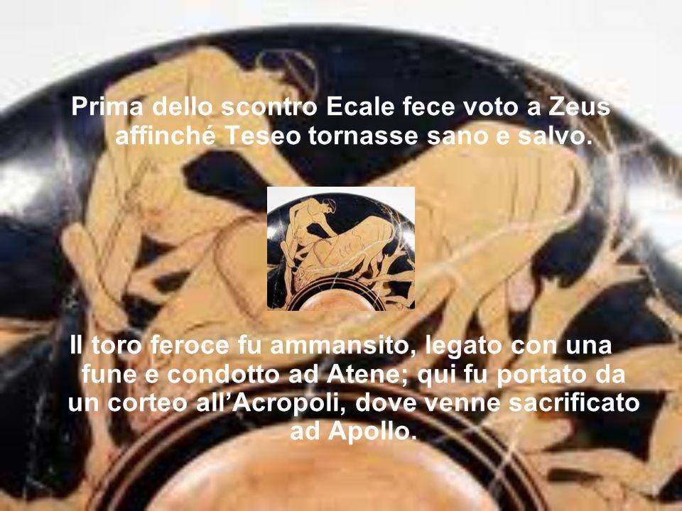 Prima dello scontro Ecale fece voto a Zeus affinché Teseo tornasse sano e salvo. Il toro feroce fu ammansito, legato con una fune e condotto ad Atene;