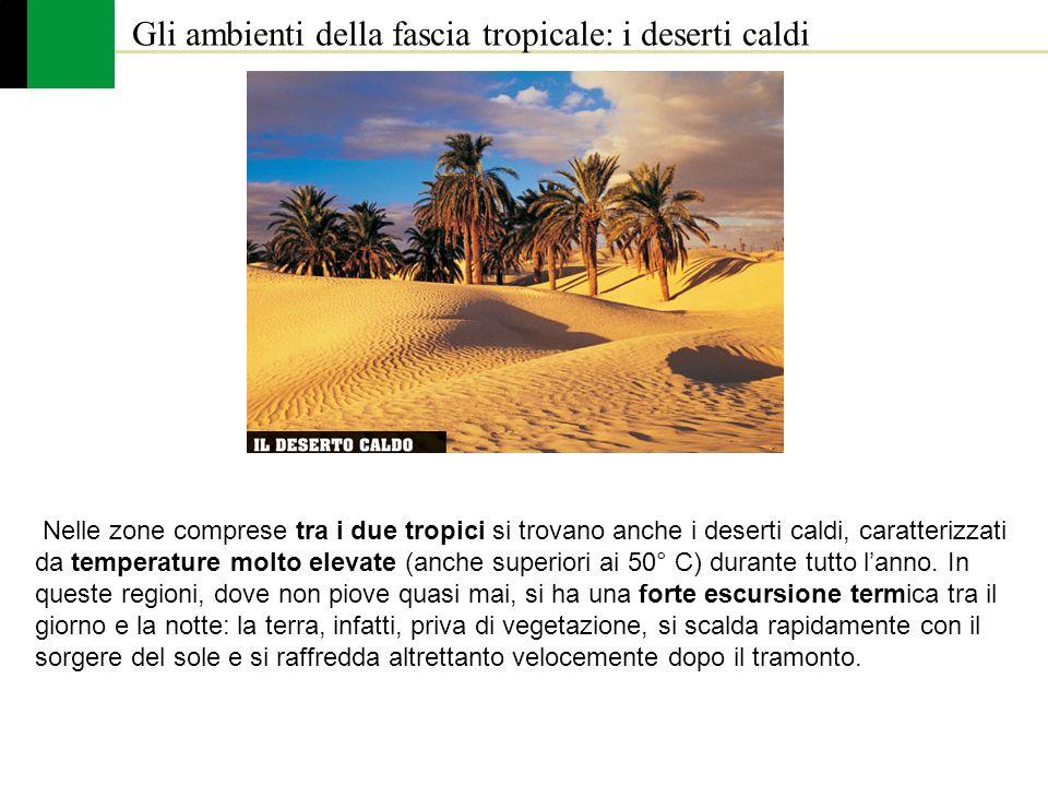Gli ambienti della fascia tropicale: i deserti caldi Nelle zone comprese tra i due tropici si trovano anche i deserti caldi, caratterizzati da tempera