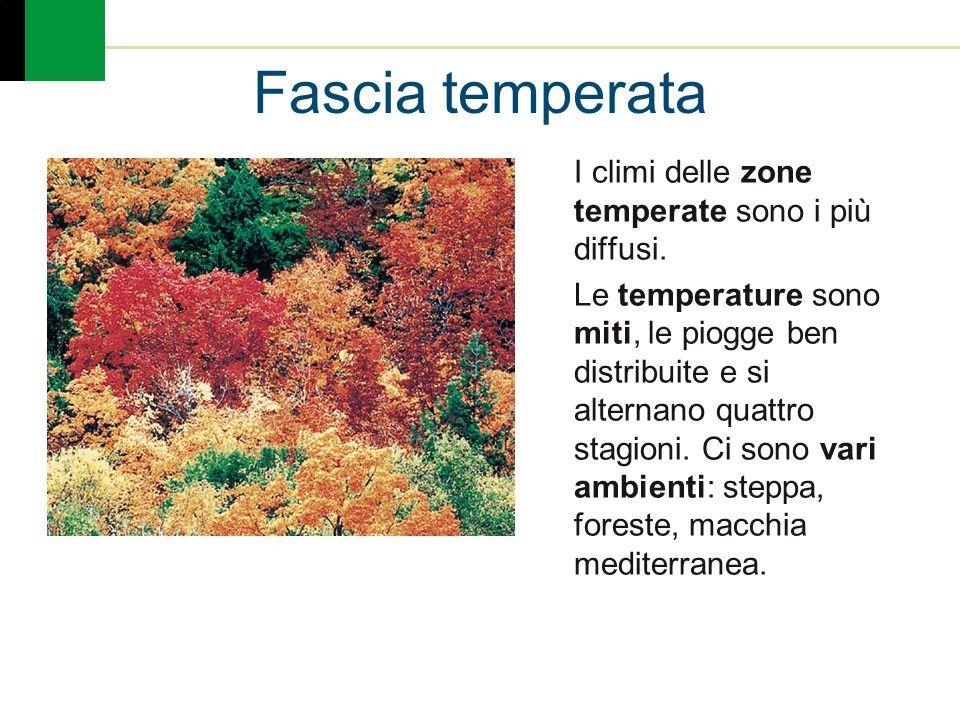 Fascia temperata I climi delle zone temperate sono i più diffusi. Le temperature sono miti, le piogge ben distribuite e si alternano quattro stagioni.