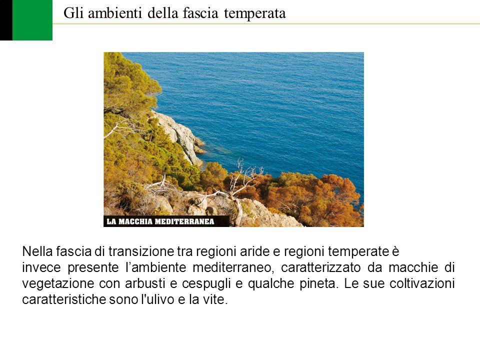 Nella fascia di transizione tra regioni aride e regioni temperate è invece presente lambiente mediterraneo, caratterizzato da macchie di vegetazione c