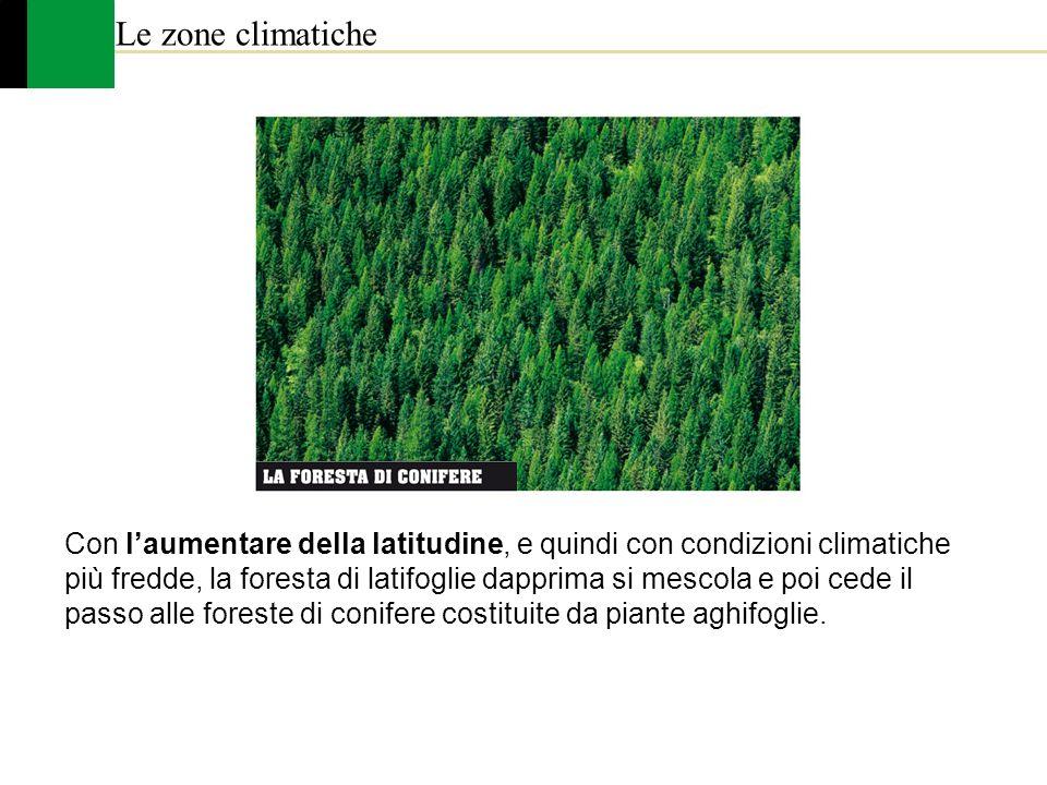 Le zone climatiche Con laumentare della latitudine, e quindi con condizioni climatiche più fredde, la foresta di latifoglie dapprima si mescola e poi
