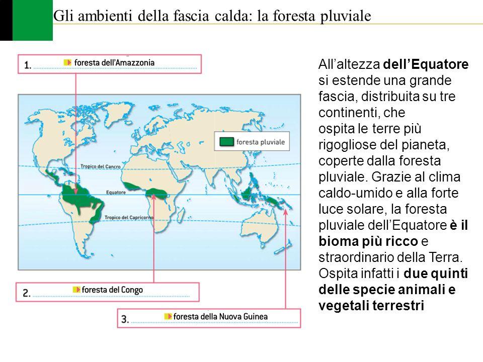 Allaltezza dellEquatore si estende una grande fascia, distribuita su tre continenti, che ospita le terre più rigogliose del pianeta, coperte dalla for