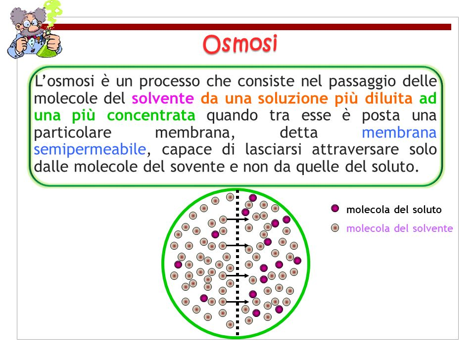 Losmosi è un processo che consiste nel passaggio delle molecole del solvente da una soluzione più diluita ad una più concentrata quando tra esse è pos