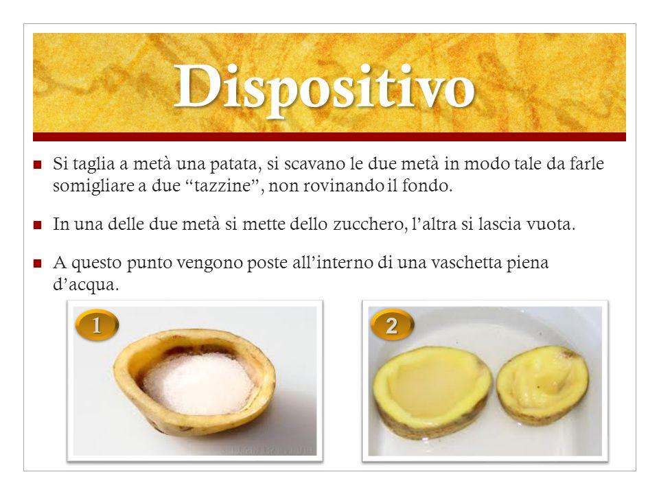 Analisi Dopo un po di tempo, si può constatare che la patata contenente lo zucchero si riempie dacqua mentre in quella vuota non si osserva lo stesso fenomeno.
