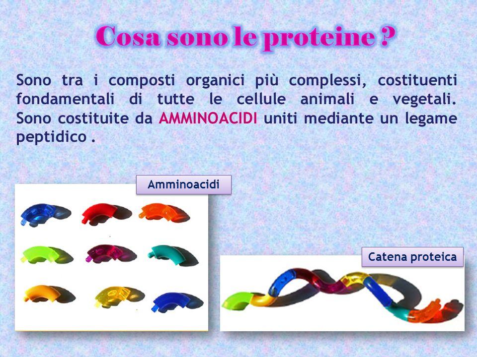 Sono tra i composti organici più complessi, costituenti fondamentali di tutte le cellule animali e vegetali. Sono costituite da AMMINOACIDI uniti medi
