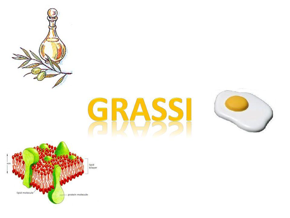 I LIPIDI GRUPPO 1 TrigliceridiFosfolipidi Vitamine liposolubili Parte idrofoba e parte idrofila Nucleo steroideo GRUPPO 2 GRUPPO 2 Colesterolo Ormoni steroidei Acidi biliari