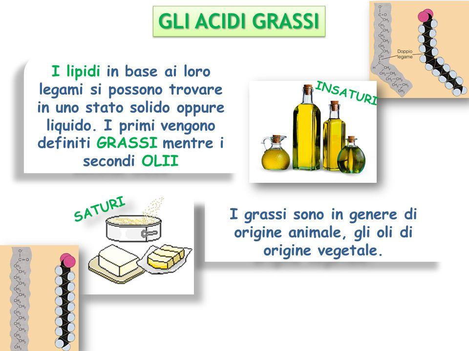 I lipidi in base ai loro legami si possono trovare in uno stato solido oppure liquido. I primi vengono definiti GRASSI mentre i secondi OLII I grassi