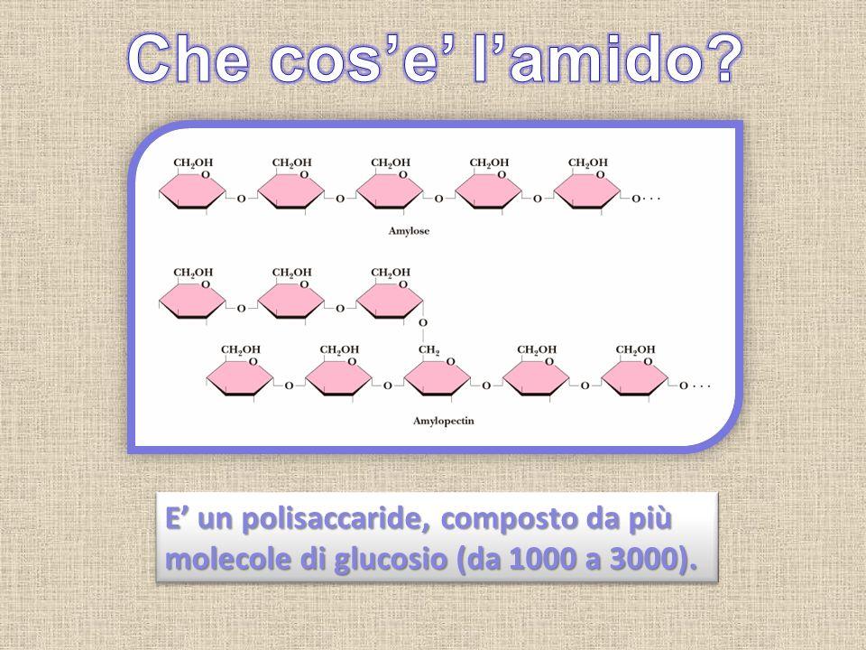 E un polisaccaride, composto da più molecole di glucosio (da 1000 a 3000).