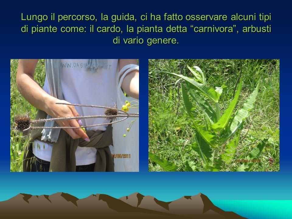 Lungo il percorso, la guida, ci ha fatto osservare alcuni tipi di piante come: il cardo, la pianta detta carnivora, arbusti di vario genere.
