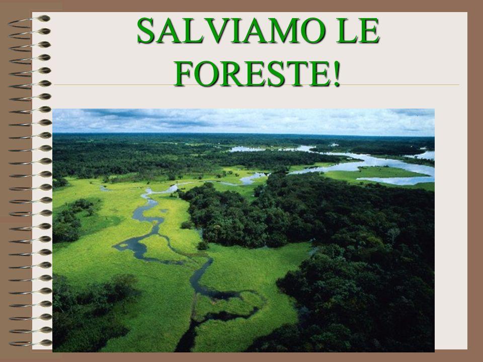 SALVIAMO LE FORESTE!