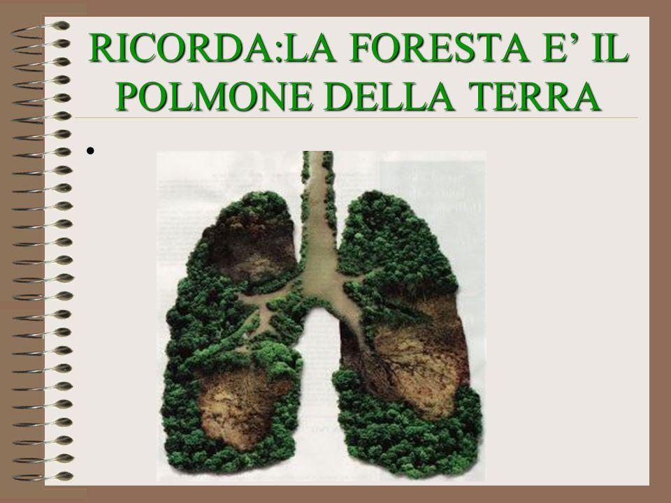 RICORDA:LA FORESTA E IL POLMONE DELLA TERRA