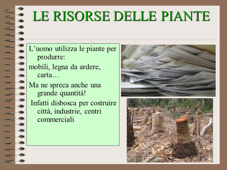 LE RISORSE DELLE PIANTE Luomo utilizza le piante per produrre: mobili, legna da ardere, carta… Ma ne spreca anche una grande quantità! Infatti disbosc