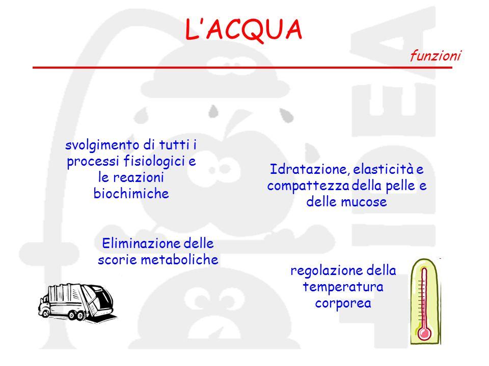 LACQUA funzioni svolgimento di tutti i processi fisiologici e le reazioni biochimiche Eliminazione delle scorie metaboliche regolazione della temperat