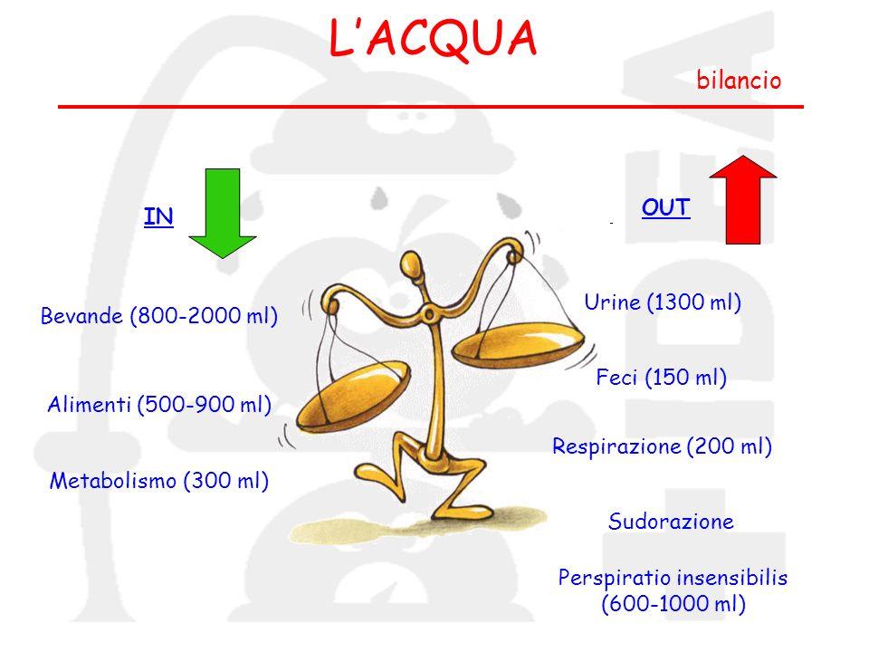 LACQUA bilancio IN OUT Bevande (800-2000 ml) Alimenti (500-900 ml) Metabolismo (300 ml) Urine (1300 ml) Feci (150 ml) Respirazione (200 ml) Sudorazion