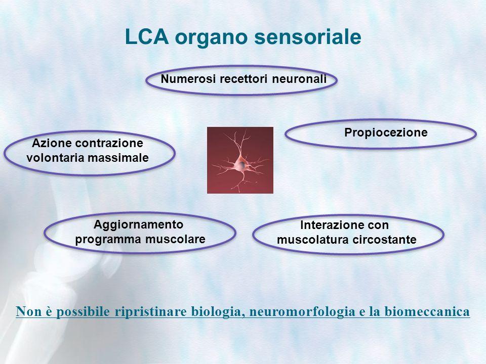 LCA organo sensoriale Non è possibile ripristinare biologia, neuromorfologia e la biomeccanica Azione contrazione volontaria massimale Propiocezione Interazione con muscolatura circostante Aggiornamento programma muscolare Numerosi recettori neuronali