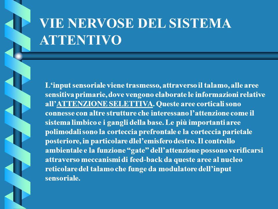 Linput sensoriale viene trasmesso, attraverso il talamo, alle aree sensitiva primarie, dove vengono elaborate le informazioni relative allATTENZIONE S