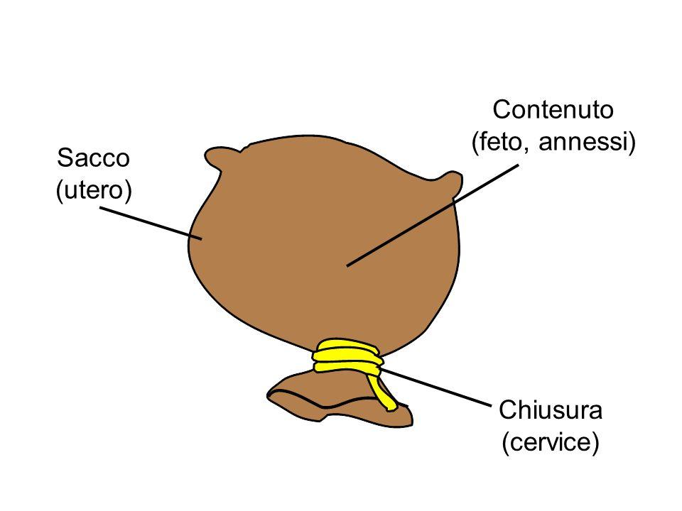 Sacco (utero) Contenuto (feto, annessi) Chiusura (cervice)