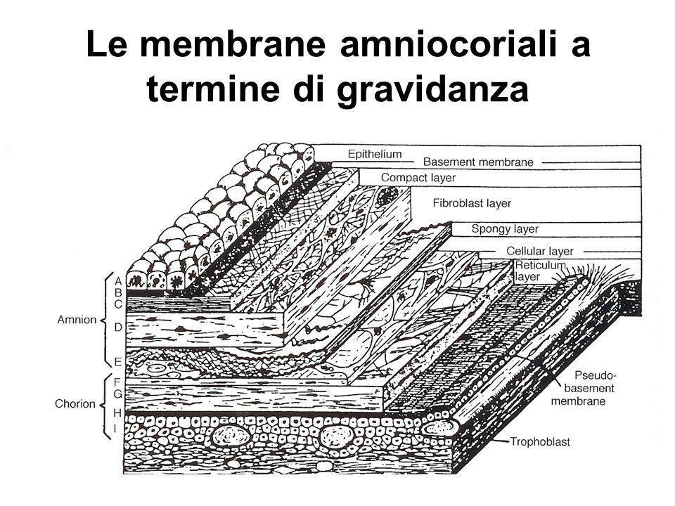 Le membrane amniocoriali a termine di gravidanza