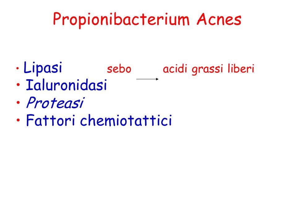 Propionibacterium Acnes Lipasi sebo acidi grassi liberi Ialuronidasi Proteasi Fattori chemiotattici