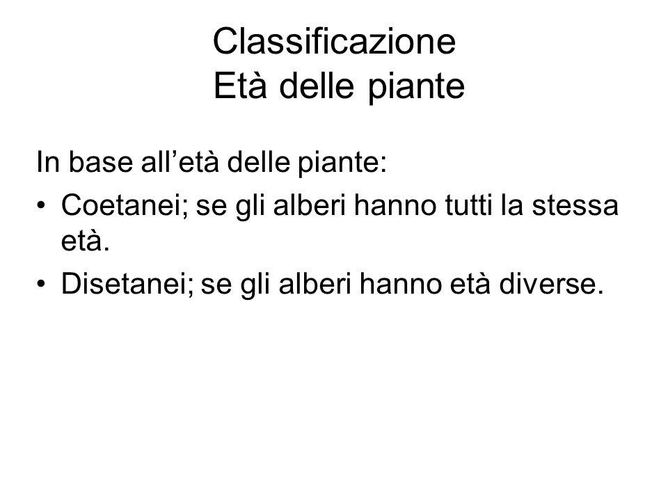 Classificazione Età delle piante In base alletà delle piante: Coetanei; se gli alberi hanno tutti la stessa età.