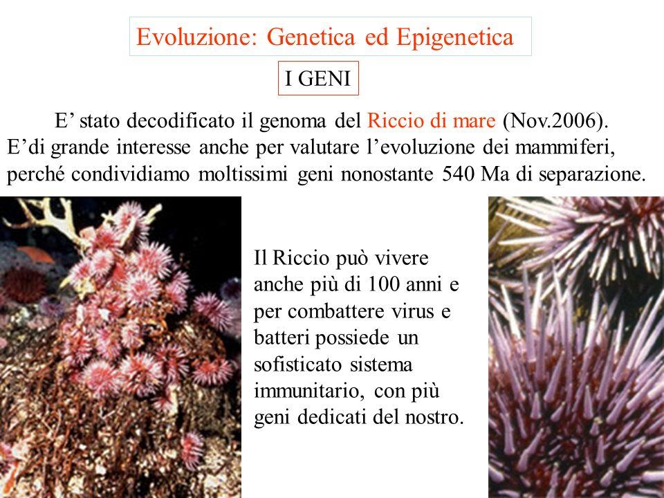 Evoluzione: Genetica ed Epigenetica I GENI Luomo condivide quasi il 99% dei geni con lo scimpanzè ed ha circa lo stesso numero di geni del topo. I gen