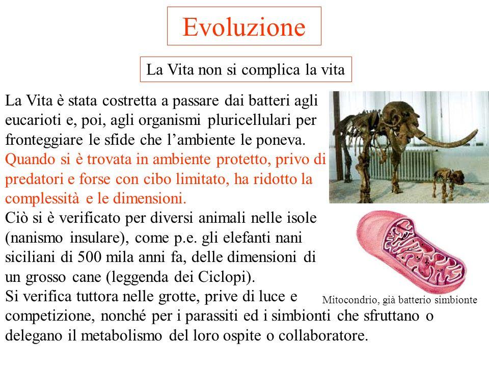 Evoluzione Genetica ed Epigenetica Lassimilazione genetica (e/o epigenetica) è particolarmente importante nei fenomeni del comportamento. Il sistema n