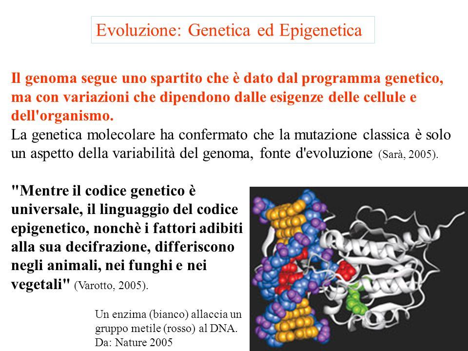 Evoluzione La Vita non si complica la vita La Vita è stata costretta a passare dai batteri agli eucarioti e, poi, agli organismi pluricellulari per fr
