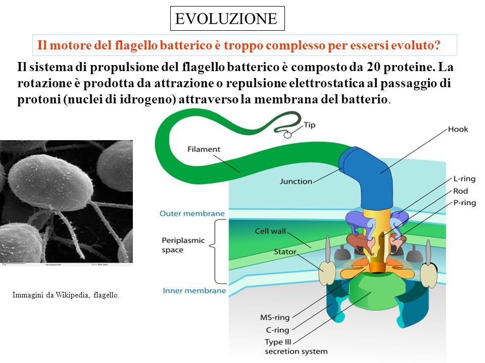 Evoluzione: Genetica ed Epigenetica La metilazione, come imprinting epigenetico, è trasmissibile alla progenie. Le esperienze di vita che lasciano un