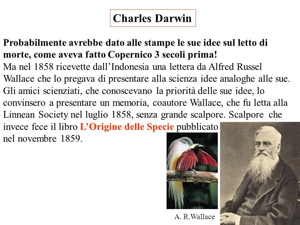 Charles Darwin Rientrato in G.B. nel 1836 elabora le sue prime idee. I risultati degli studi sui suoi reperti, affidati ad esperti di varie discipline