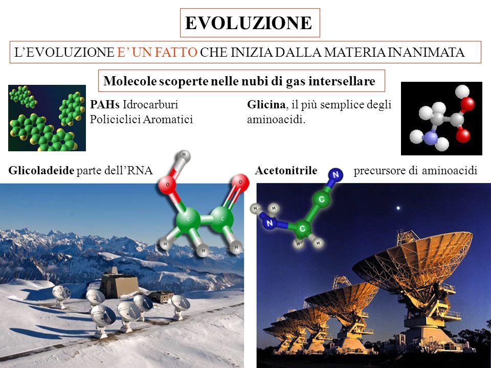 EVOLUZIONE LEVOLUZIONE E UN FATTO CHE INIZIA DALLA MATERIA INANIMATA Glicina, il più semplice degli aminoacidi.