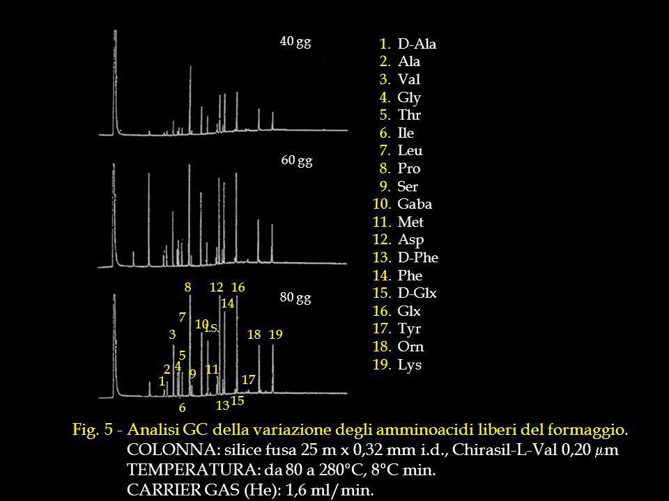 Fig.5 - Analisi GC della variazione degli amminoacidi liberi del formaggio.