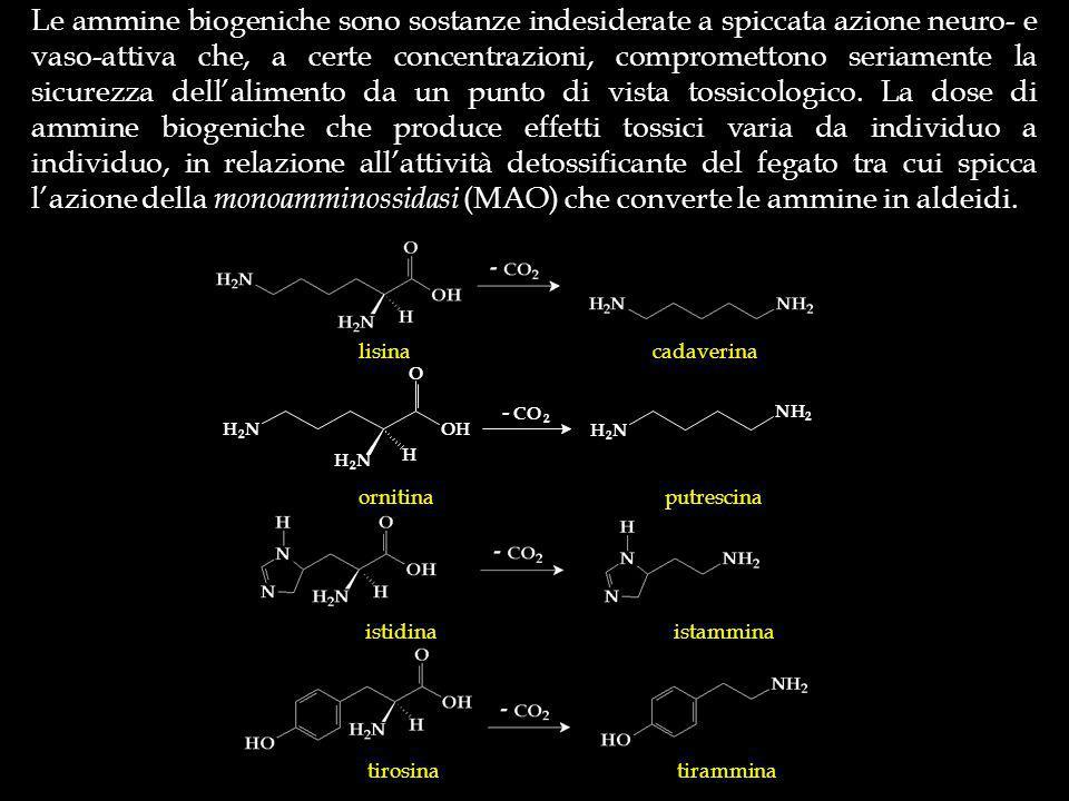 Le ammine biogeniche sono sostanze indesiderate a spiccata azione neuro- e vaso-attiva che, a certe concentrazioni, compromettono seriamente la sicurezza dellalimento da un punto di vista tossicologico.