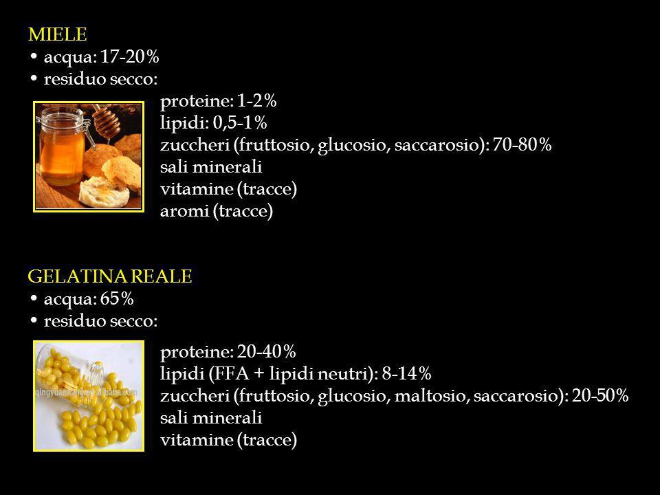 Fig.4 - Analisi GC degli amminoacidi liberi del formaggio.
