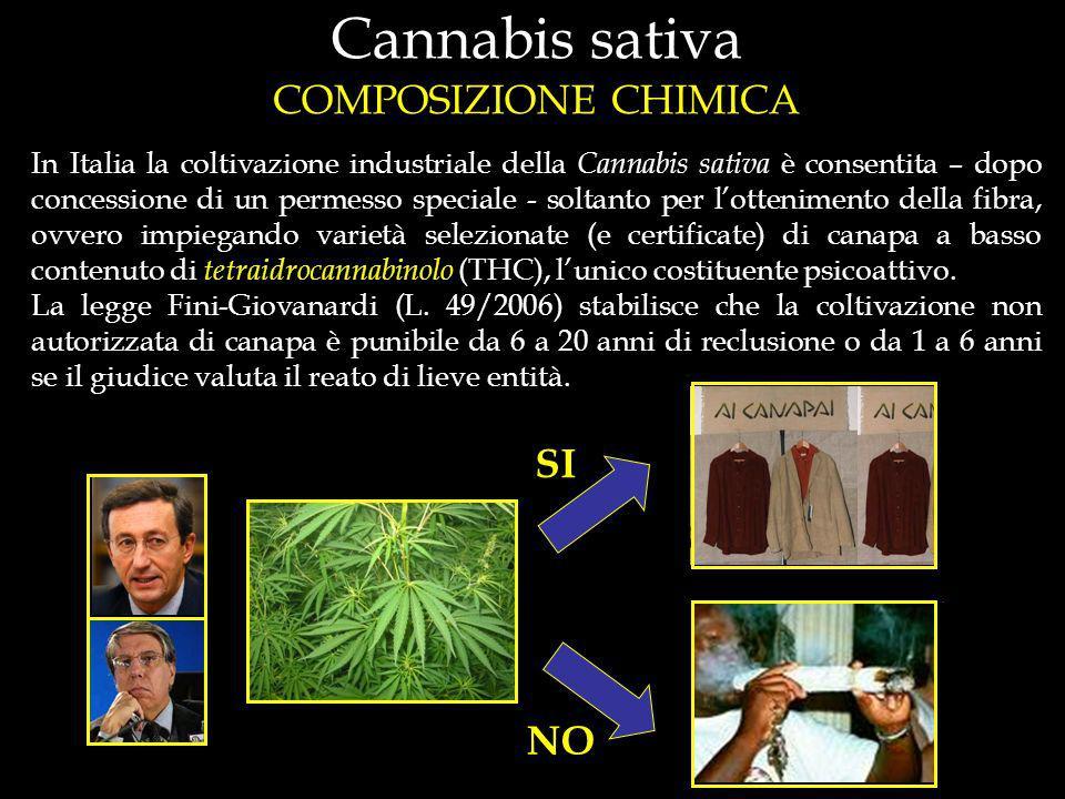 In Italia la coltivazione industriale della Cannabis sativa è consentita – dopo concessione di un permesso speciale - soltanto per lottenimento della fibra, ovvero impiegando varietà selezionate (e certificate) di canapa a basso contenuto di tetraidrocannabinolo (THC), lunico costituente psicoattivo.