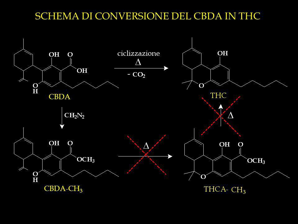 SCHEMA DI CONVERSIONE DEL CBDA IN THC CBDA CBDA-CH 3