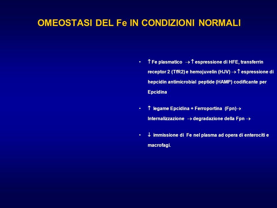OMEOSTASI DEL Fe IN CONDIZIONI NORMALI Fe plasmatico espressione di HFE, transferrin receptor 2 (TfR2) e hemojuvelin (HJV) espressione di hepcidin ant