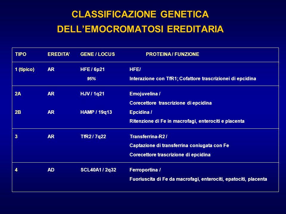 CLASSIFICAZIONE GENETICA DELLEMOCROMATOSI EREDITARIA TIPOEREDITAGENE / LOCUSPROTEINA / FUNZIONE 1 (tipico)ARHFE / 6p21HFE/ 95% Interazione con TfR1; C