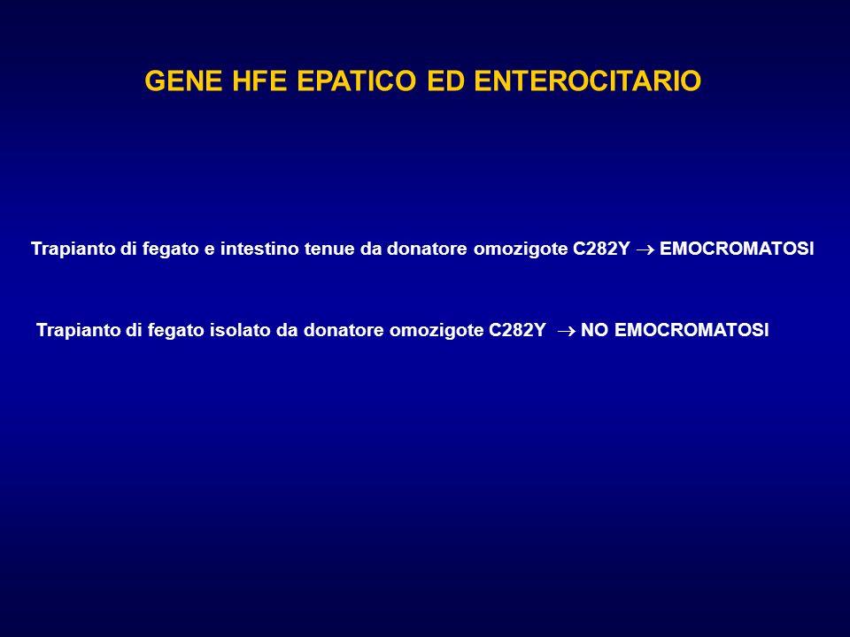 GENE HFE EPATICO ED ENTEROCITARIO Trapianto di fegato e intestino tenue da donatore omozigote C282Y EMOCROMATOSI Trapianto di fegato isolato da donato