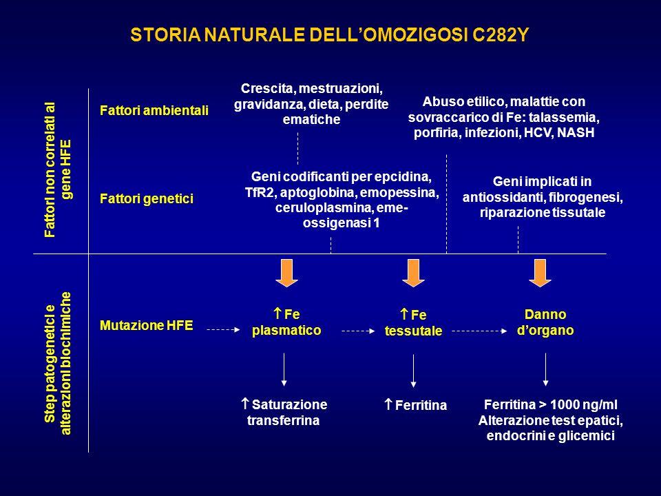 STORIA NATURALE DELLOMOZIGOSI C282Y Fattori non correlati al gene HFE Step patogenetici e alterazioni biochimiche Fattori ambientali Fattori genetici