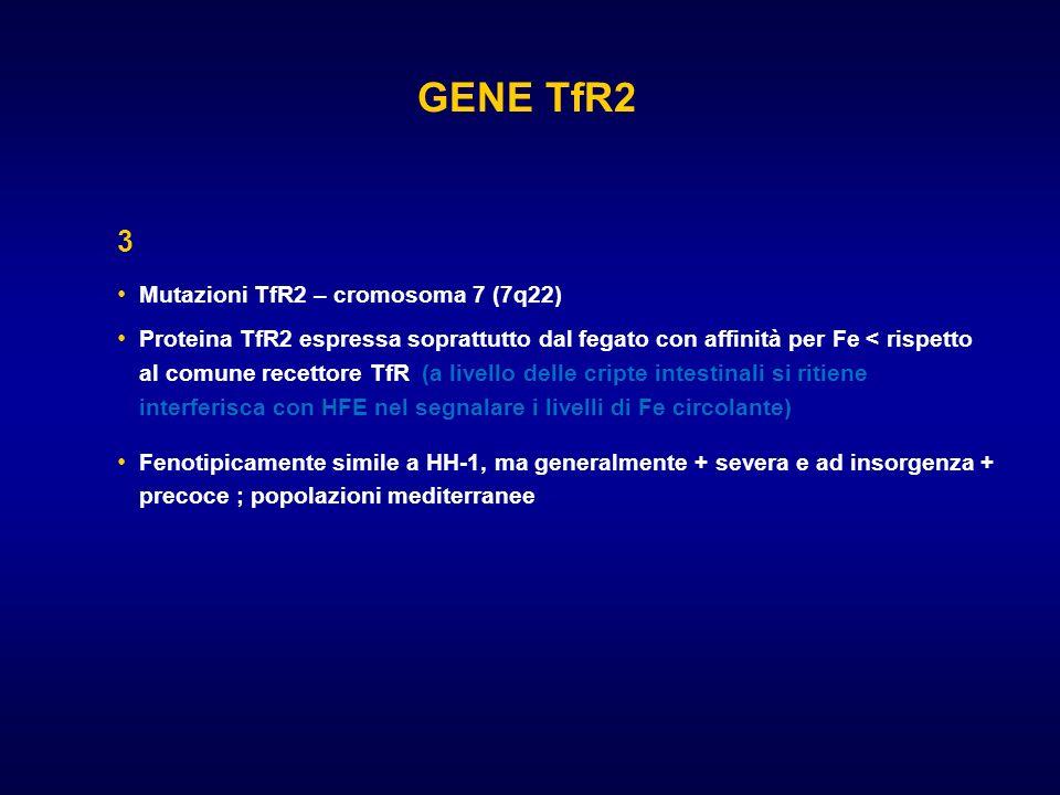 GENE TfR2 3 Mutazioni TfR2 – cromosoma 7 (7q22) Proteina TfR2 espressa soprattutto dal fegato con affinità per Fe < rispetto al comune recettore TfR (