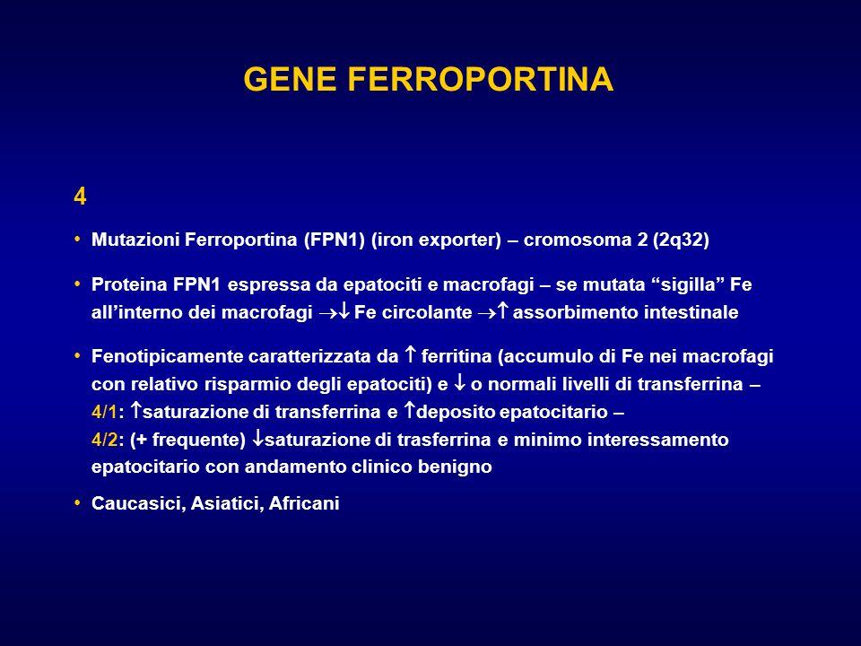 GENE FERROPORTINA 4 Mutazioni Ferroportina (FPN1) (iron exporter) – cromosoma 2 (2q32) Proteina FPN1 espressa da epatociti e macrofagi – se mutata sig