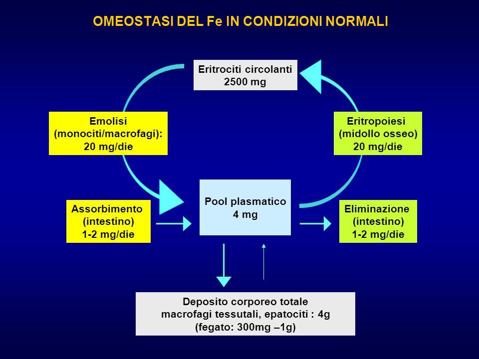OMEOSTASI DEL Fe IN CONDIZIONI NORMALI Eritrociti circolanti 2500 mg Assorbimento (intestino) 1-2 mg/die Eliminazione (intestino) 1-2 mg/die Pool plas