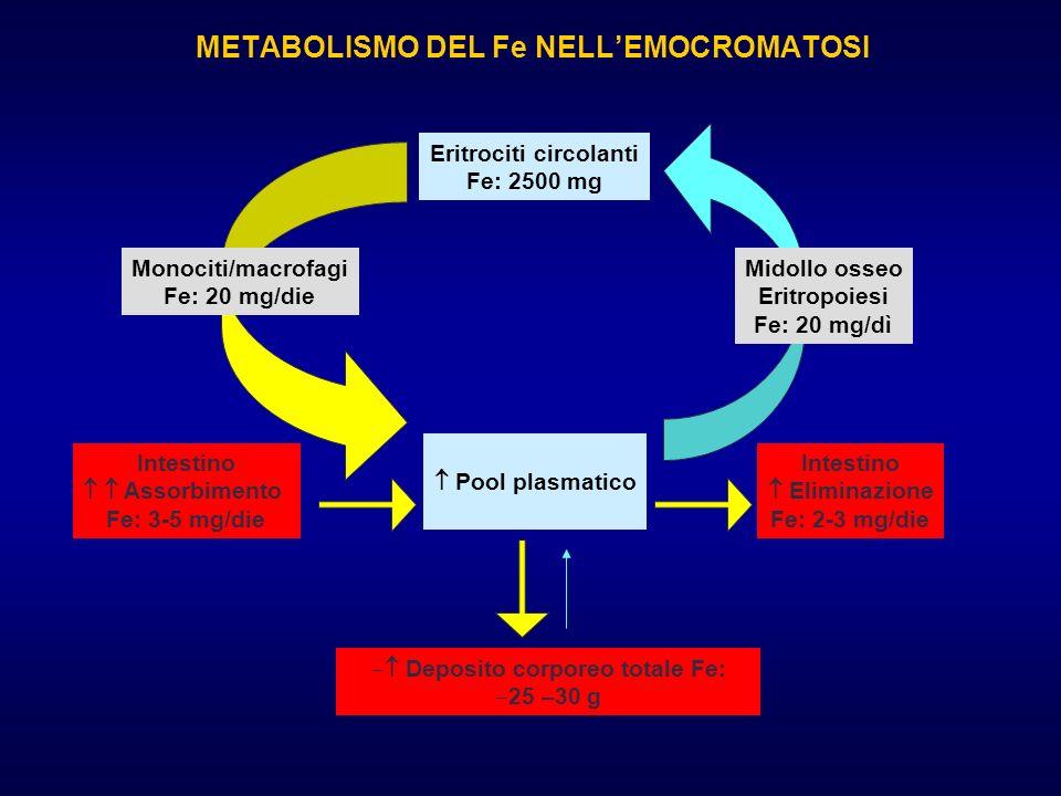 METABOLISMO DEL Fe NELLEMOCROMATOSI Eritrociti circolanti Fe: 2500 mg Intestino Assorbimento Fe: 3-5 mg/die Intestino Eliminazione Fe: 2-3 mg/die Pool