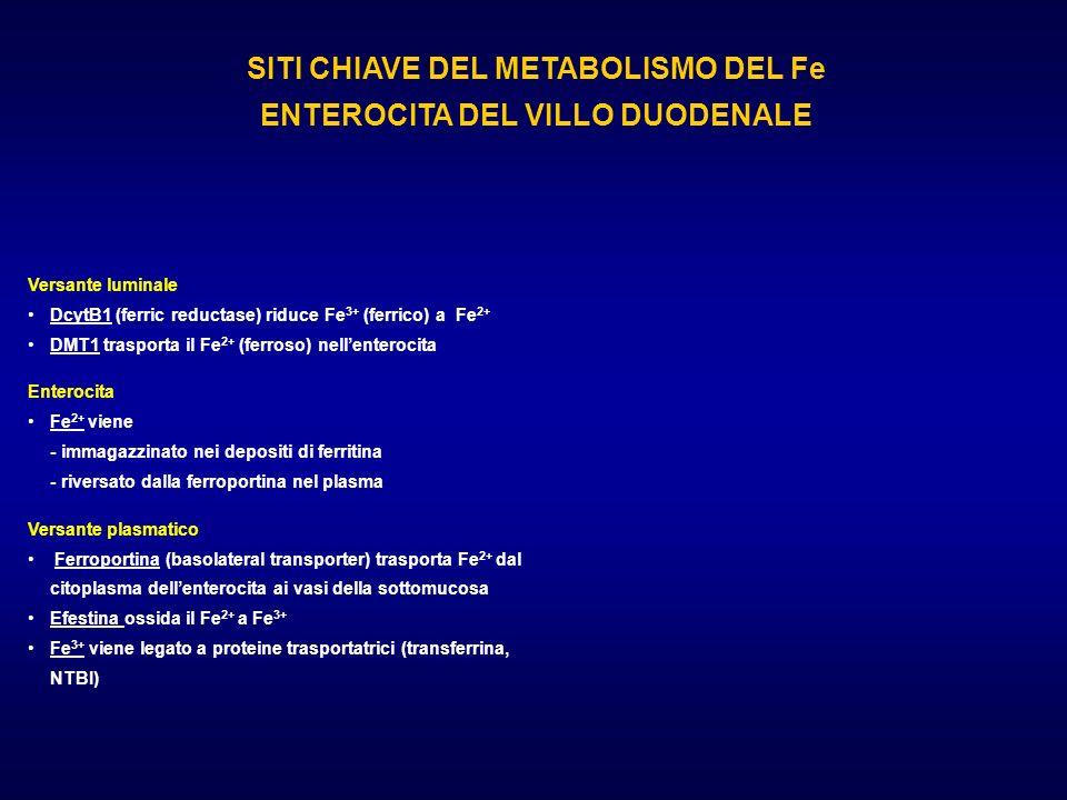 SITI CHIAVE DEL METABOLISMO DEL Fe ENTEROCITA DEL VILLO DUODENALE Versante luminale DcytB1 (ferric reductase) riduce Fe 3+ (ferrico) a Fe 2+ DMT1 tras