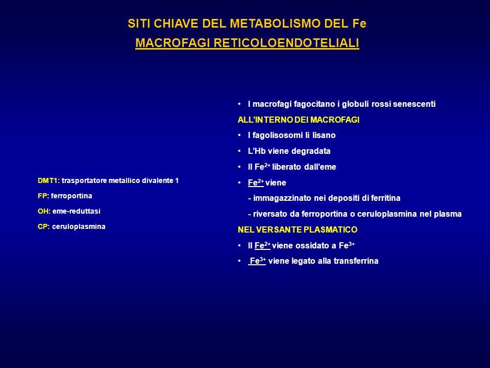 SITI CHIAVE DEL METABOLISMO DEL Fe MACROFAGI RETICOLOENDOTELIALI DMT1: trasportatore metallico divalente 1 FP: ferroportina OH: eme-reduttasi CP: ceru