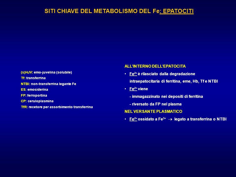 SITI CHIAVE DEL METABOLISMO DEL Fe: EPATOCITI ALLINTERNO DELLEPATOCITA Fe 2+ è rilasciato dalla degradazione intraepatocitaria di ferritina, eme, Hb,
