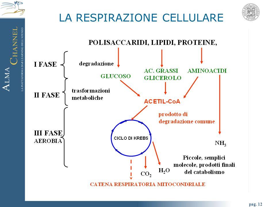 pag. 12 LA RESPIRAZIONE CELLULARE